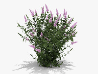 Pink Delight Butterfly Bush (359)