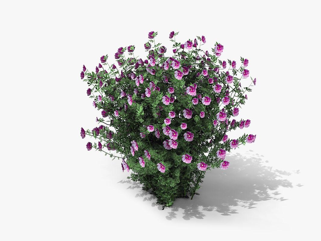 3d plant alyogyne huegelii monle