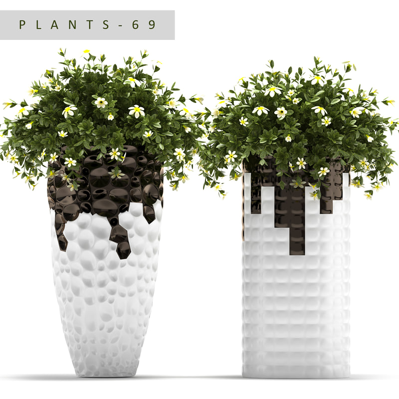 plants 69 flowered 3d max