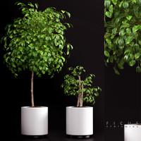 plant 70 3d max