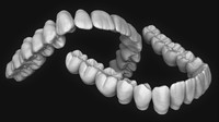 3d upper lower jaw teeth anatomy model