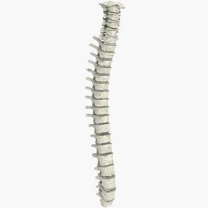 3d ma realistic vertebral column