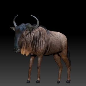 3d model wildebeest