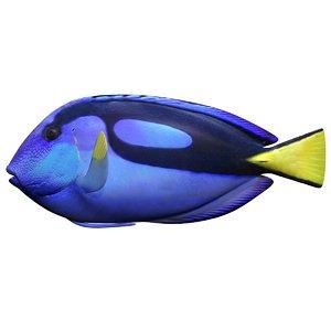 3d realistic blue tang model
