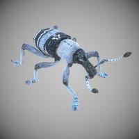 3d model weevil eupholus beetle