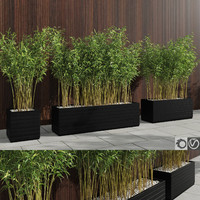 3d bamboo plants fargesia murielae