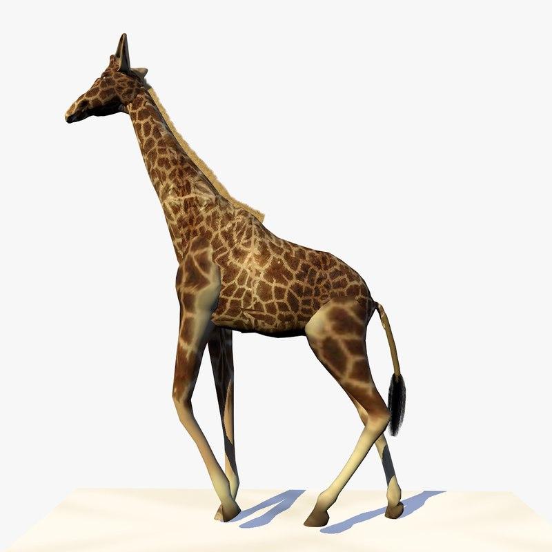3d giraffe walking animation