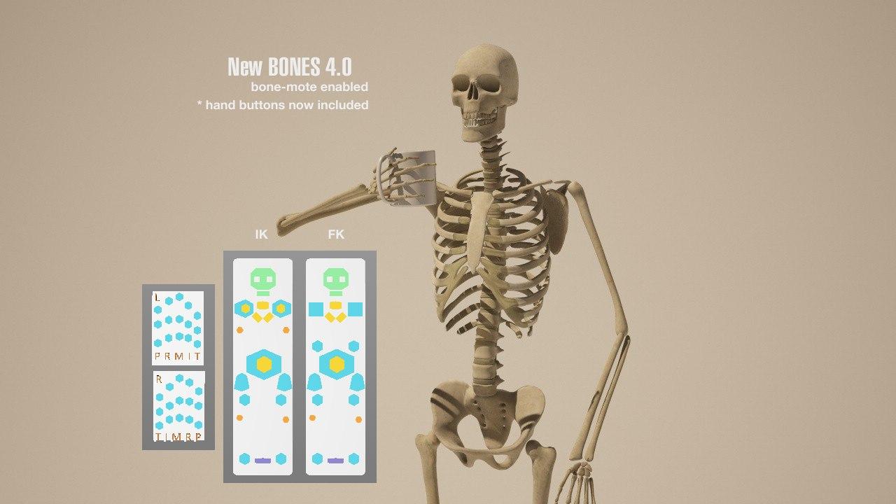 3d model of character bone