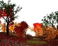 3d autumn forest trees model