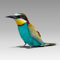 3d bee-eater animations model