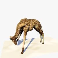giraffe eating grass realistic 3d model