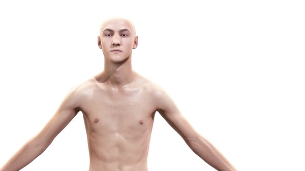 3d man character body anatomy model