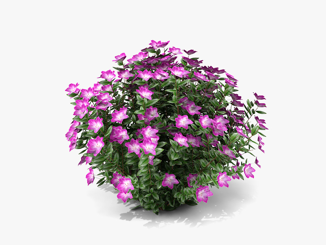 small plant flowers max