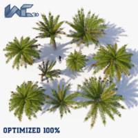 3d model optimized palm tree