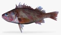 x calico rockfish