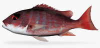 3d fbx pacific red snapper