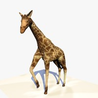 giraffe standing animation 3d c4d