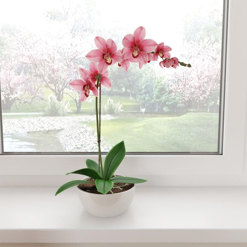 orchid 3d max