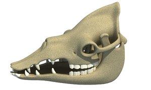 3d model dromedary camel skull skeleton