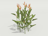 3d model plant heliconia psittacorum