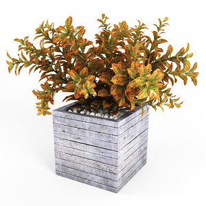 3d model of croton tree