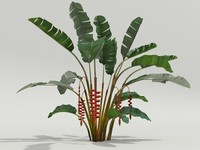 3d plant heliconia rostrata