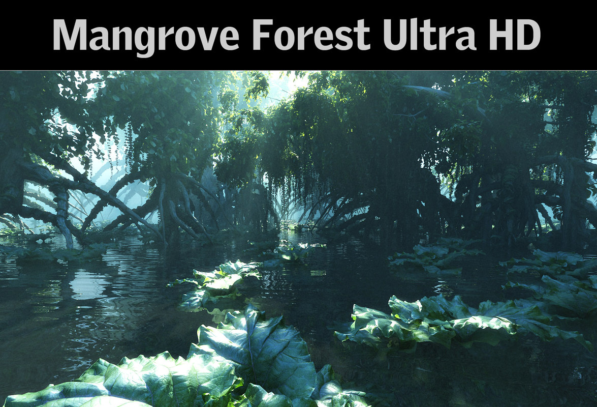 max mangrove forest ultra hd