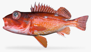 rosy rockfish 3d model