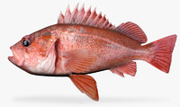 3d model of vermillion rockfish