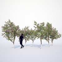 blooming apple tree 3d max