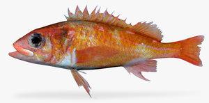 swordspine rockfish fbx