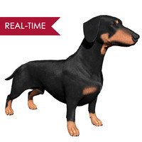 Dachshund Real-Time