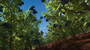 blueberry field 3d max
