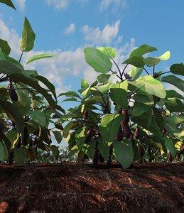 eggplant field 3d max