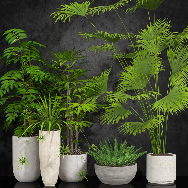 3d plants potted