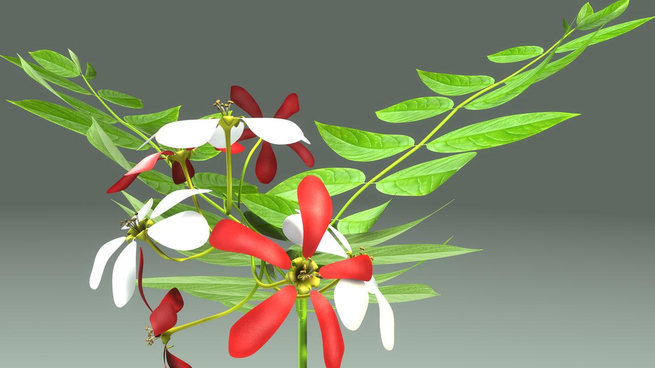 3d model quisqualis flower