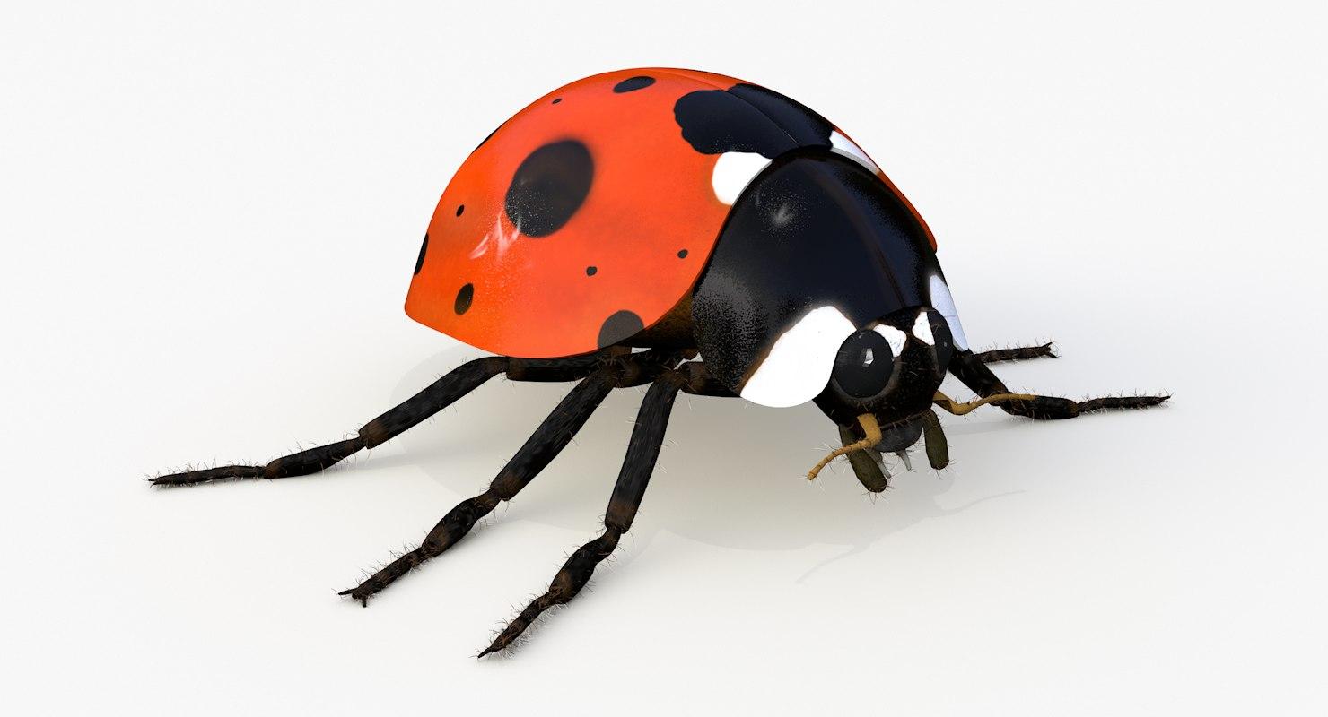 3d realistic ladybug model