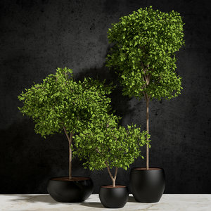3d model plants ficus benjamin