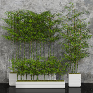 3d bamboo plants