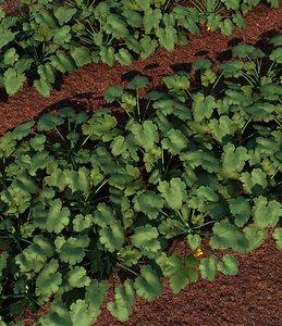 zucchini field 3d max