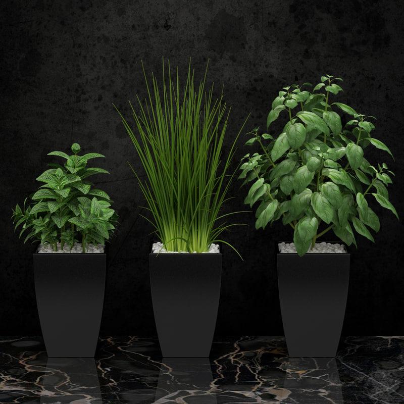 3d model plants kitchen