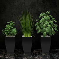 3d model plants kitchen