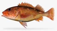 3d starry rockfish