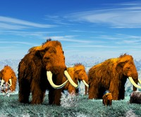 3d woolly mammoth