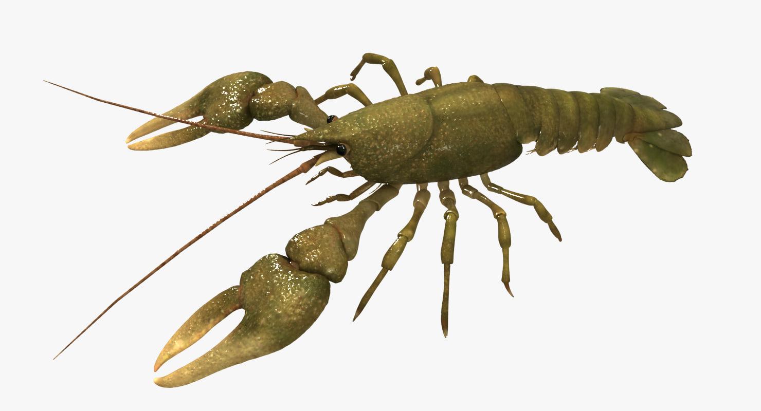 crayfish 3d x