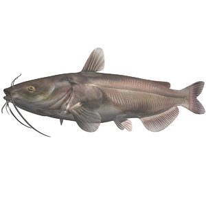 realistic channel catfish 3d 3ds