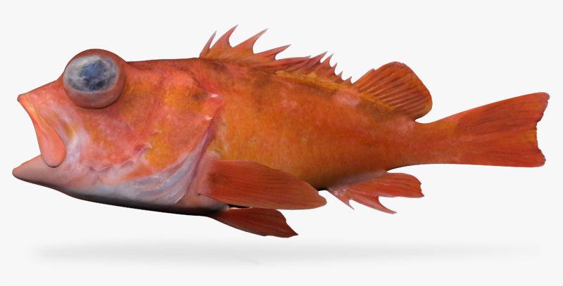 3d spineye rockfish model