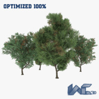 3d melia azedarach trees model