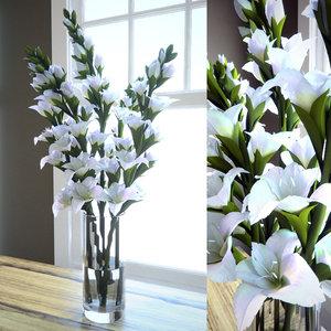 3d model gladiolus