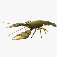 3d model crayfish animation